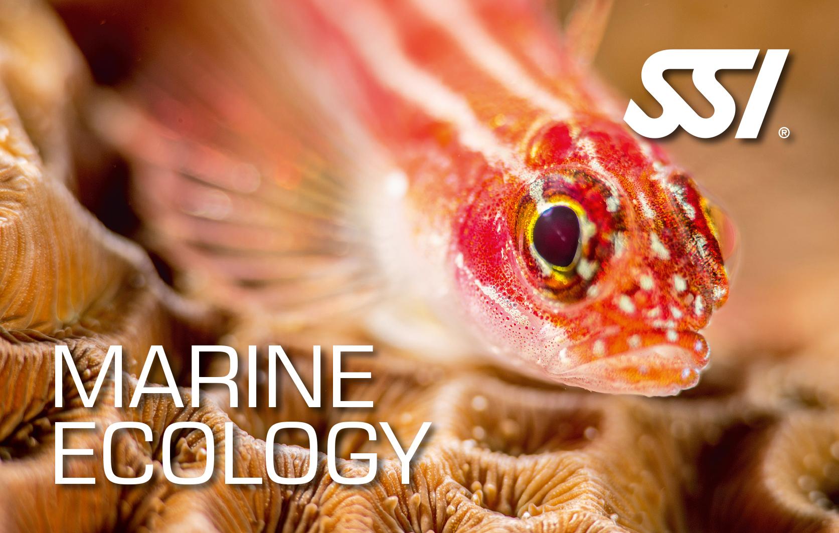 Морская экология